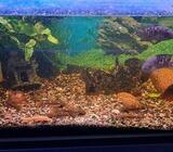 Akvarium, 1 stk