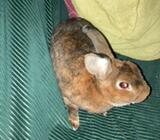 Kanin, Lille rex, 2 år